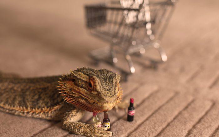 爬虫類を販売するショップを7つ紹介