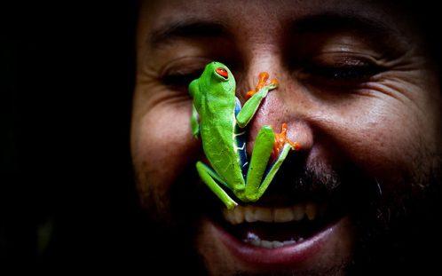 アカメアマガエルの可愛い画像と生態を紹介