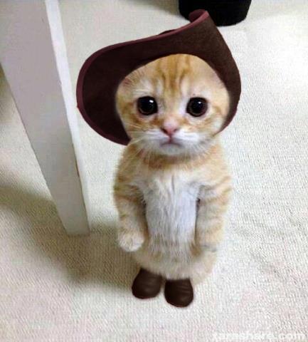 【画像・動画】可愛い動物たち!可愛いすぎて一気にストレスふっとんだwww