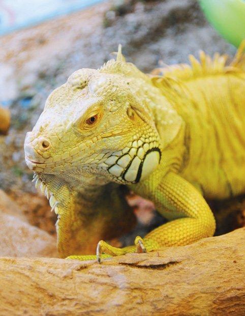 【画像】ベトナムの爬虫類カフェがすごい!