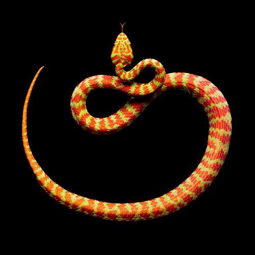 【画像】世界一美しい蛇wwwwwwwwwww