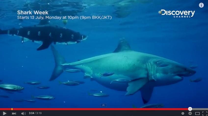 【動画】体重1900kg、体長6m超えの超巨大ホオジロザメが撮影される!!