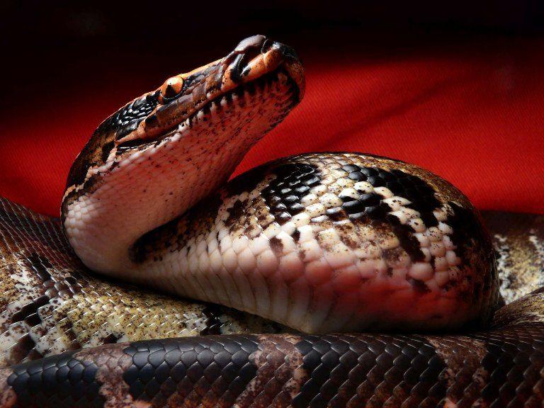 【画像】VIPに爬虫類好きはいるの?