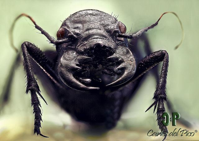 【画像】虫カッコよすぎワロタwwwwwwwwww