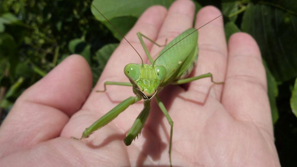 【画像】素手で触れる昆虫で男としてのレベルが図れるとおもうww