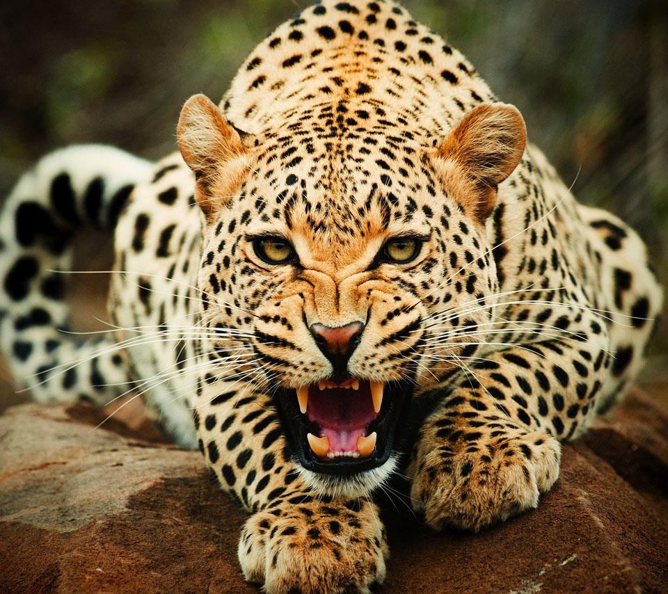 世界で最も人を殺している動物ランキング