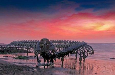 【画像】深海のサメ、ラブカが網にかかる 伝説の「大海蛇」の正体?