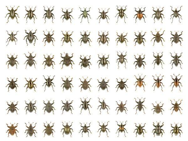 【画像】新種!101匹ゾウムシを並べてみた