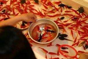 【飼育】金魚(和金型)とアカハライモリ一緒に飼いたいんだが