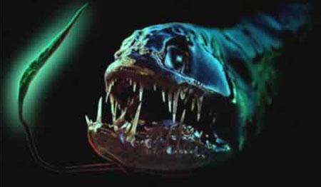 【画像】深海生物キモすぎワロタwwwwwwwwwwwwwwwww