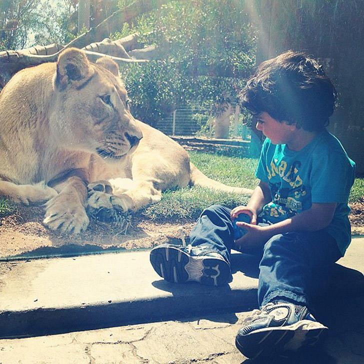 【画像】小さい子と大きな動物のいやし画像