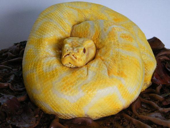 【閲覧注意】ビルマニシキヘビのケーキのクオリティがヤバ過ぎるwww
