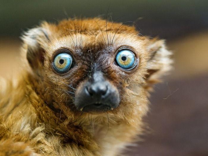 【閲覧注意】ちょっとキモイ! 地球上で最も特徴的な動物の目9選