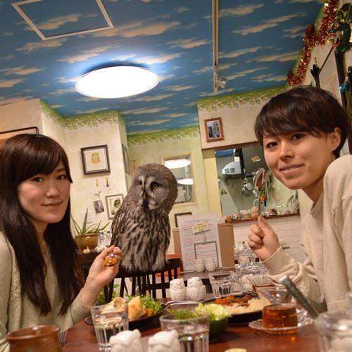 【画像】動物カフェが人気!フクロウ、ヤギ、爬虫類も!!