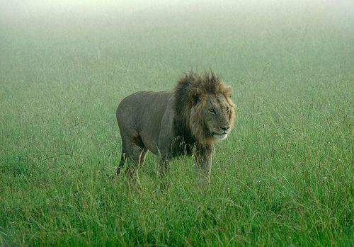 【閲覧注意】ライオンに食べられた飼育員いなかったっけ?