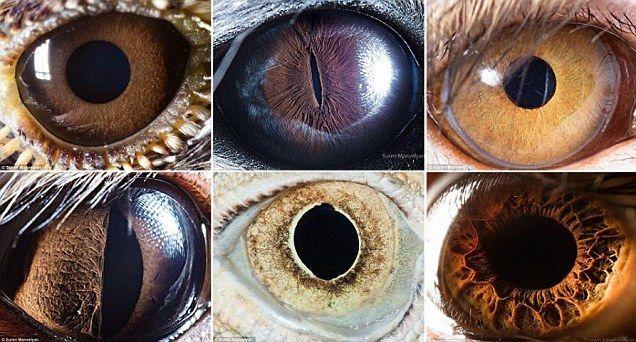 【画像】人間の目はどれ?いろんな動物の目をクローズアップ!