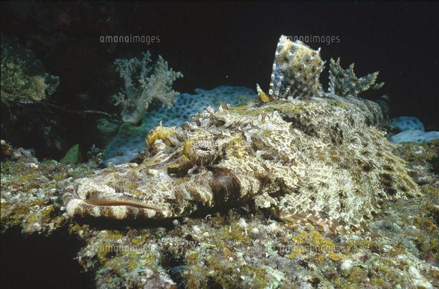 【画像あり】ボルネオ島沖で発見された新種の魚??