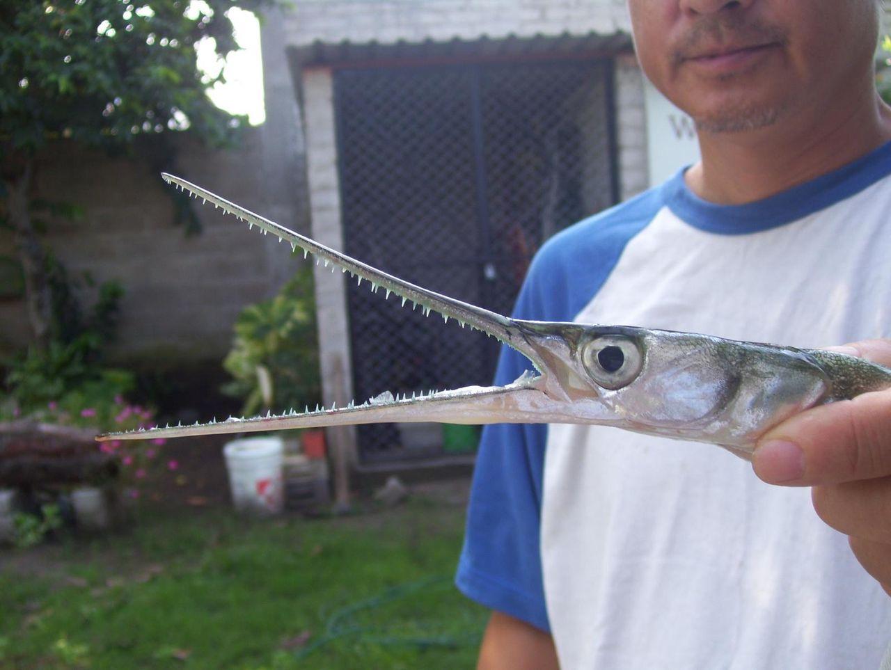 【画像多数】海の危険生物で打線組んでみたwww