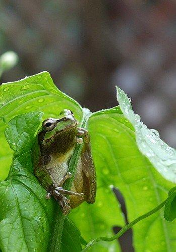 【画像多数】かわいいカエルやらの動物貼ってくスレ!