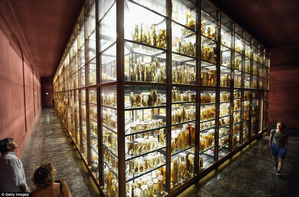 【閲覧注意】ベルリンのガラスの動物園が怖すぎる・・・