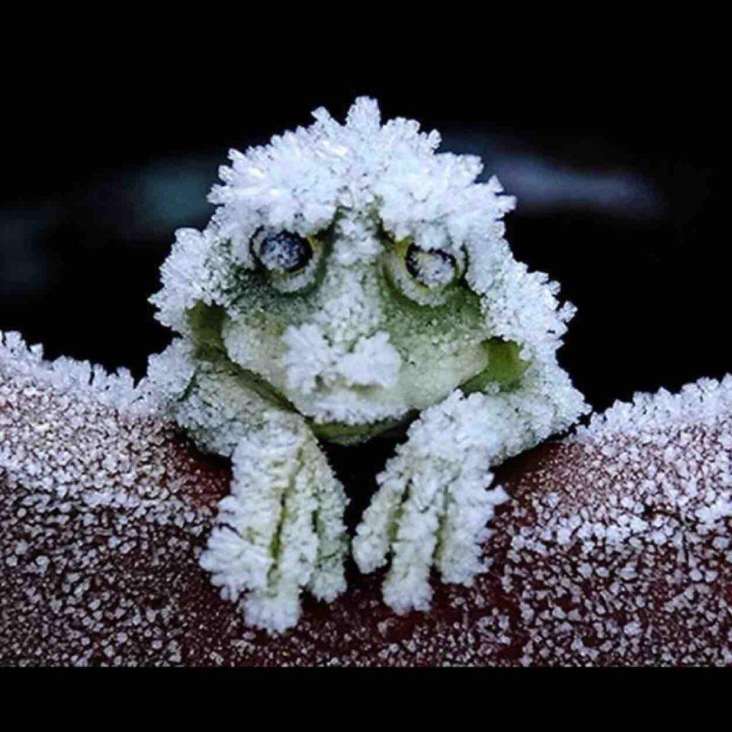 【画像】これがアラスカのカエルらしい
