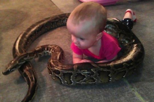 【画像】米男性、家でヘビや爬虫類30匹を飼う 1歳の子供を守るため4mのヘビも