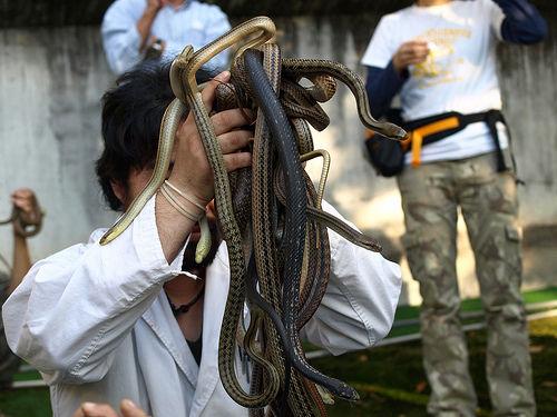 ヘビにめっちゃ詳しいけど質問ある?