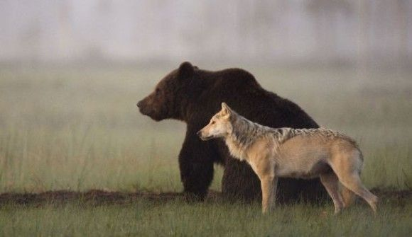 【画像】自然界最強動物議論スレ