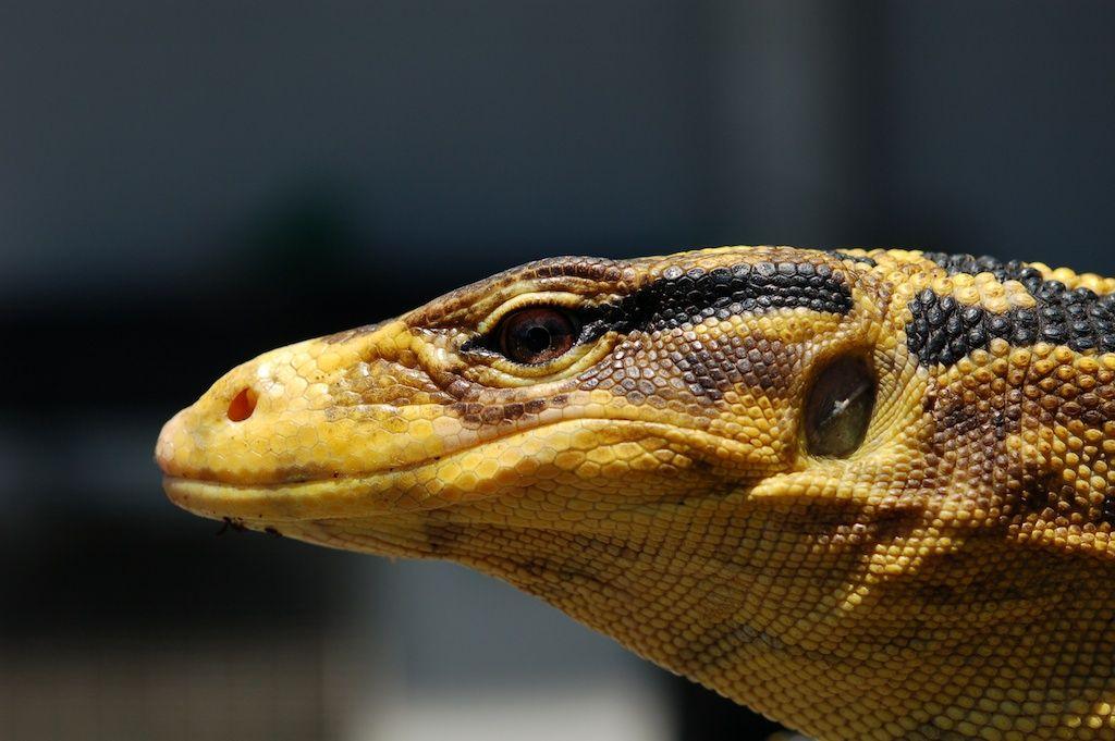 ペット不可物件。爬虫類とか熱帯魚なら飼ってもいいよね・・・