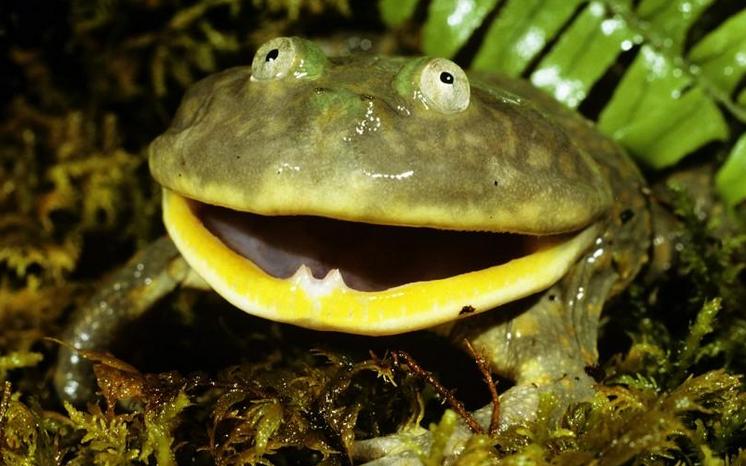 カエルの飼育方法と飼育器具を紹介 part3