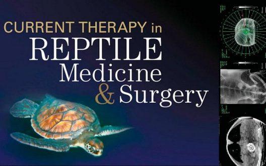 爬虫類の病気に対応!爬虫類のための病院リスト33選