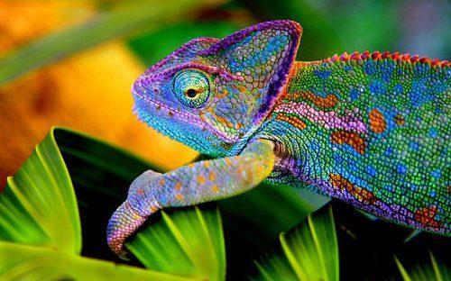 izooで爬虫類と体験してほしい3つのイベント