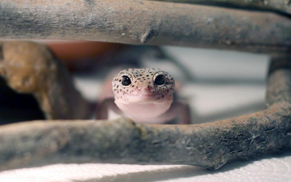 爬虫類を飼育する前に知っておきたい5つの事