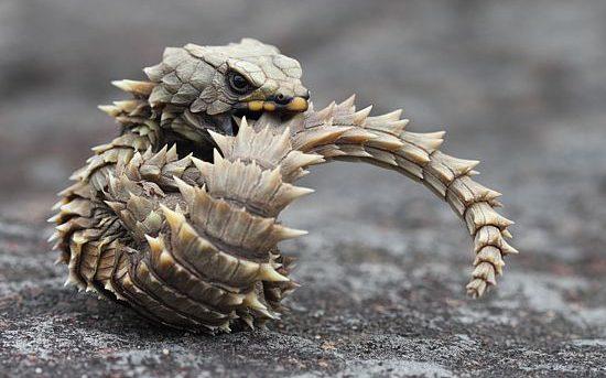 爬虫類を飼育している人が少なくて悲しい・・・