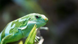 爬虫類園「izoo」で見るべきおすすめの爬虫類ベスト5