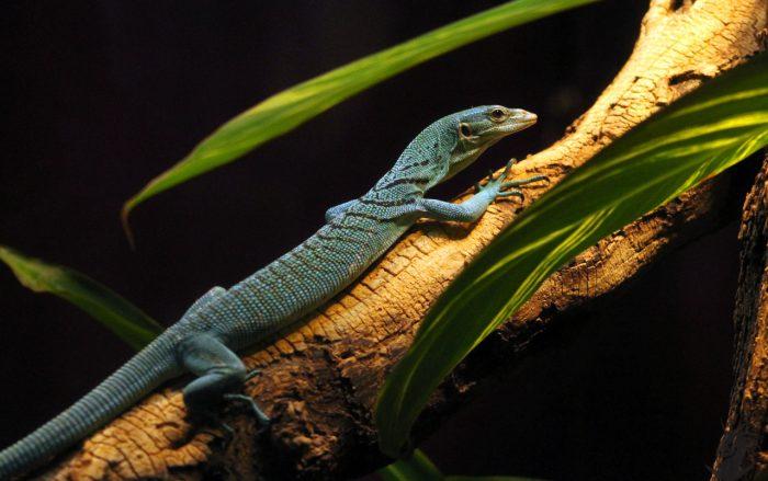 飼育する爬虫類を選ぶための3つの心得
