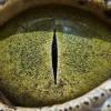 【画像】ジンバブエのホテルのベッドの下であの恐ろしい爬虫類に遭遇・・・
