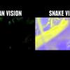 【動画】動物たちの視界をジャック!ヘビって世界がこう見えてるんだね