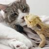 フトアゴヒゲトカゲの飼育方法と飼育器具を紹介 part4