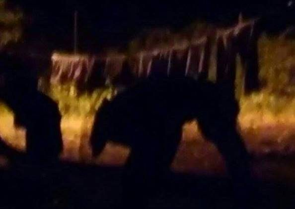 【画像】アイルランド、プエルトリコで未確認生物が撮影される