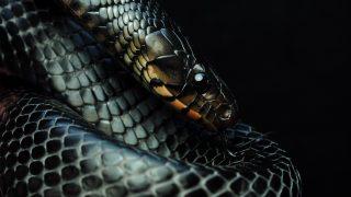 ヘビの飼育方法と飼育器具を紹介 part3