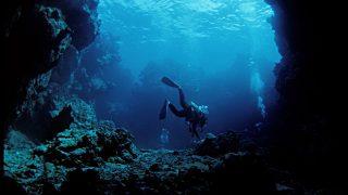 【動画】バリ島でダイバーが未確認生物を撮影する