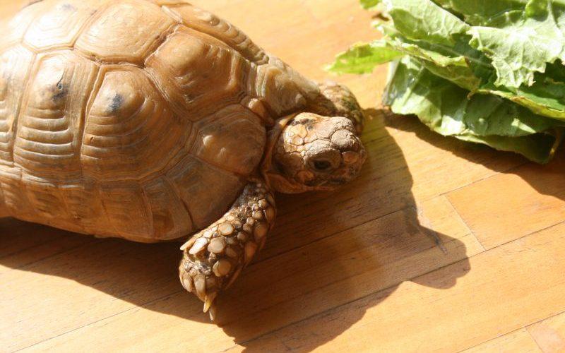 リクガメの飼育方法と飼育器具 part1