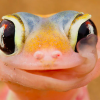 【画像】可愛い爬虫類・両生類の画像を集めてみました!