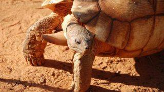【クレイジージャーニー】加藤英明さんの爬虫類愛が凄い