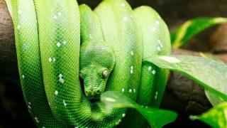 ヘビの飼育方法と飼育器具紹介 part2