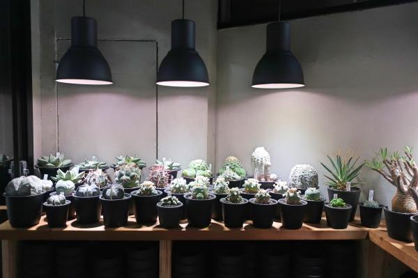 IKEAのライトと植物たち