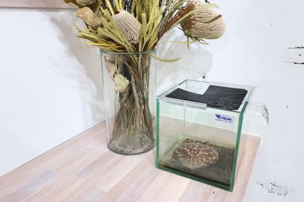 ベルツノガエル飼育環境