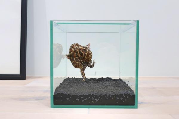 ベルツノガエル新飼育環境画像②