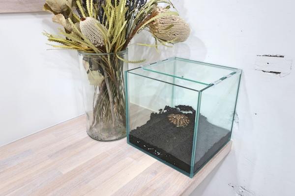 ベルツノガエル新飼育環境画像④